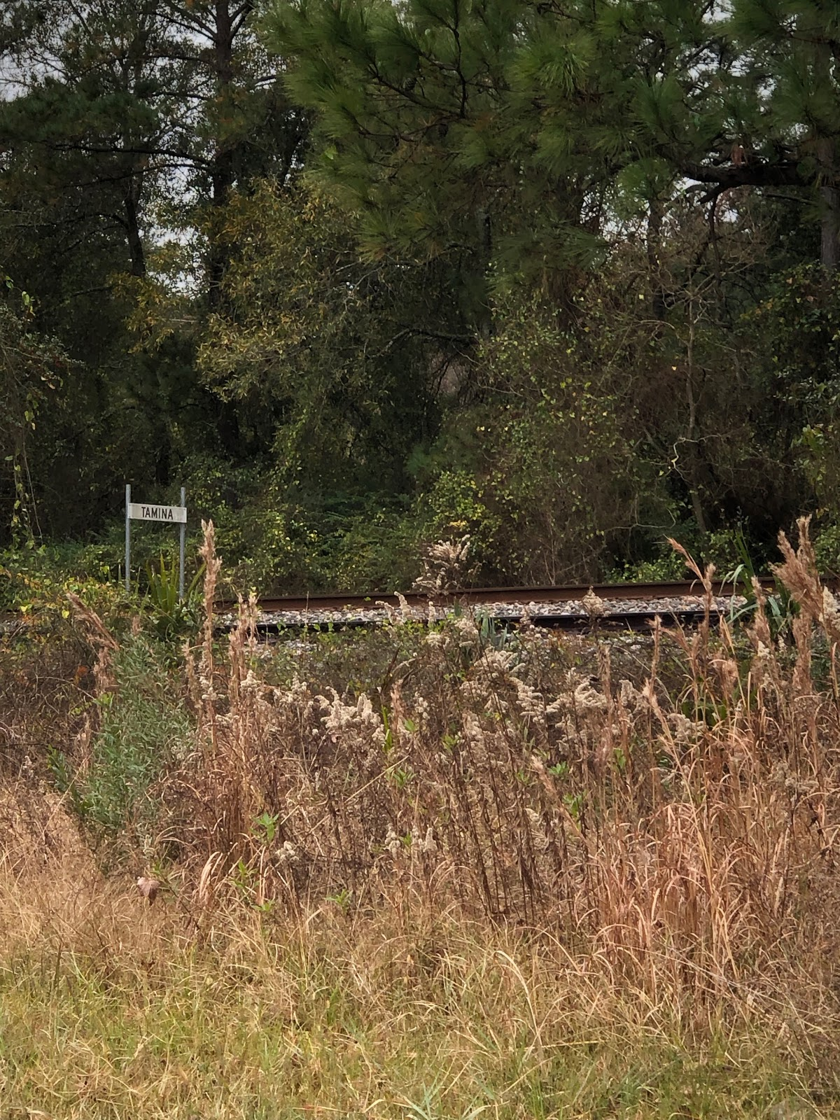 "Tall grasses are shown in front of railroad tracks and a sign that reads ""Tamina."""