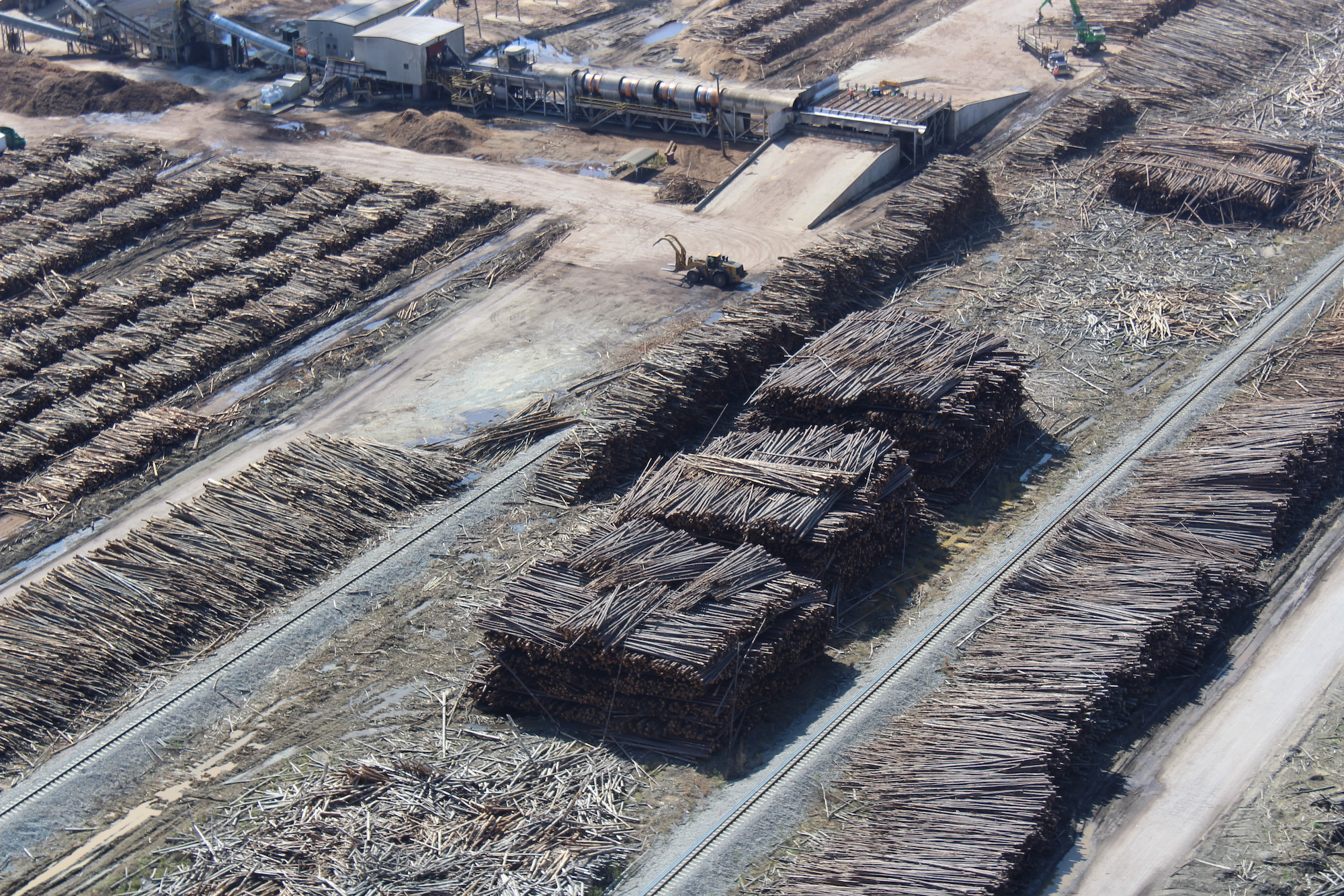 Piles of trees and wood residuals stacked in preparation for wood pellet production